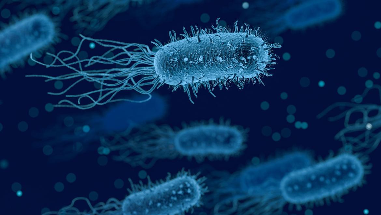 Wirusy, Bakterie, Pasożyty, Grzyby
