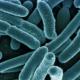 Zestaw probiotyki i białka
